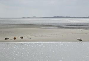 En sælfie med en sæl og tre sæler;-) Foto: Steen Larsen